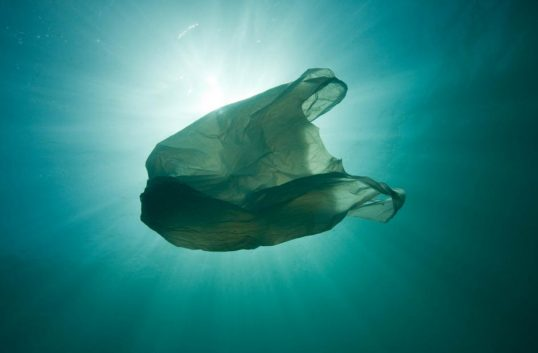 Vill förbjuda plastkassar