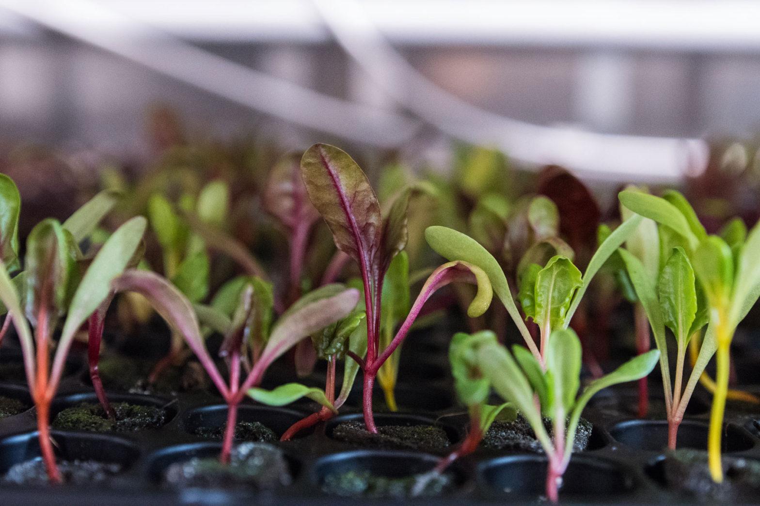 Att odla i kontainer – fjällodlat eller ej?