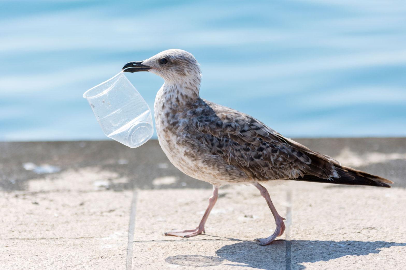 Finansierar kunskap om återvinning av plast