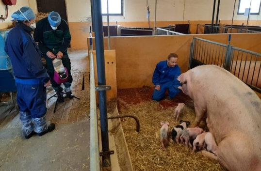 """""""Vår grisuppfödning imponerar på andra"""""""